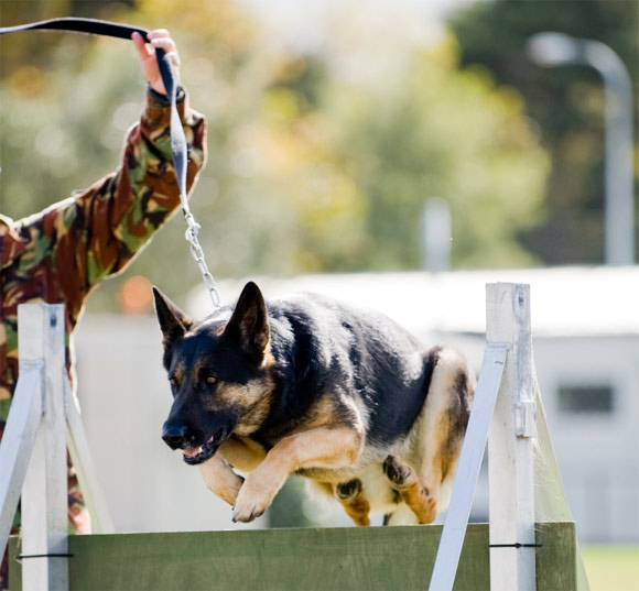 Prior von Heisenberg - Military Working Dog Unit